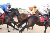 Racecourse of Pornichet - Horse races