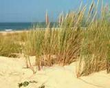 sentier du littoral Pornichet balade rando patrimoie architecture végétal dunes