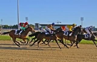 courses-galop-photo-oshin-1075050